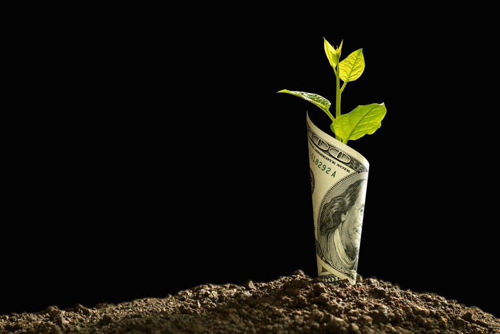 A small plant growing out of the ground with a USD hundred dollar bill wrapped around the stem
