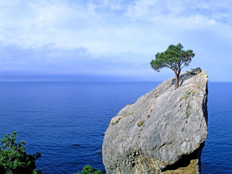 A large rock face going straight up and overlooking a blue ocean on a cloudy day with a lone tree growing out of the center
