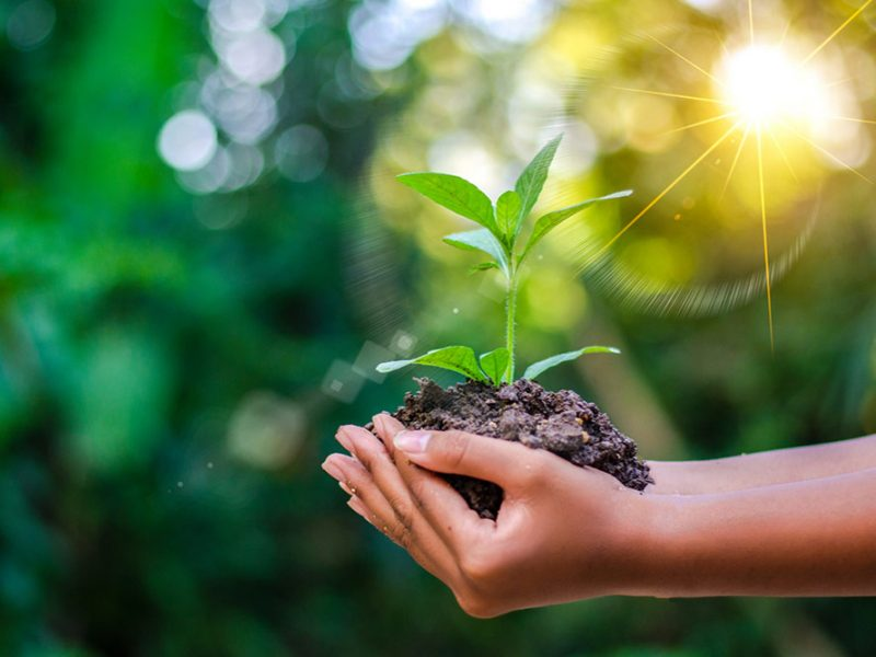 Outstretched hands holding a small, green plant in a pile of dirt in the sunlight