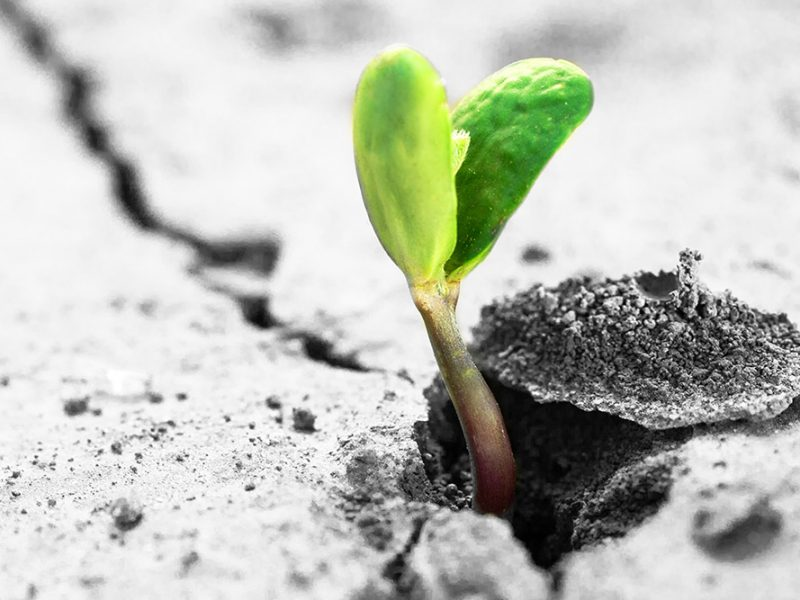 Closeup image of a small green plant growing out of a crack in a sidewalk