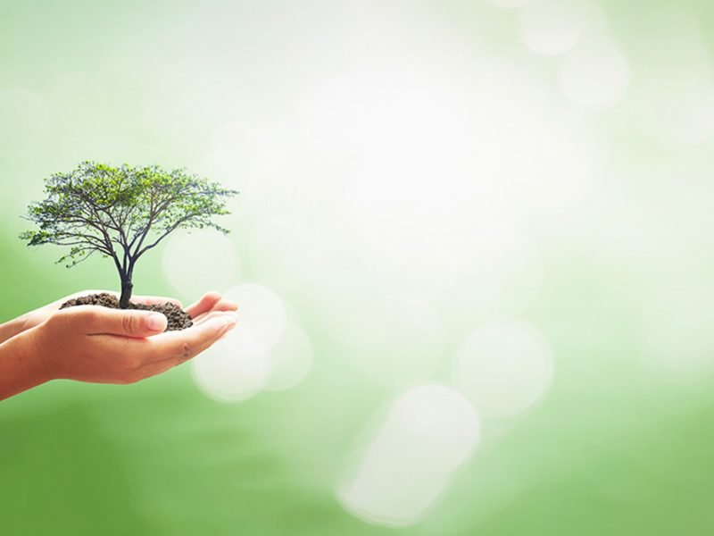 Outstretched hands holding a small tree in a pile of dirt in the sunlight and a green background